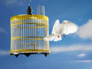 A bird flying out of a cage